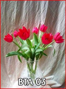 BTA-03-Jual-Bunga-Tulip