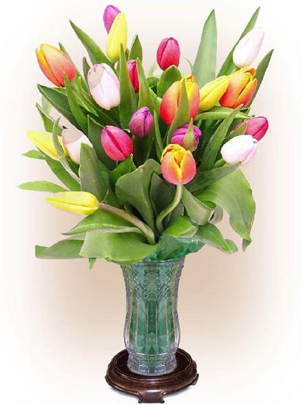 Bunga Tulip Segar