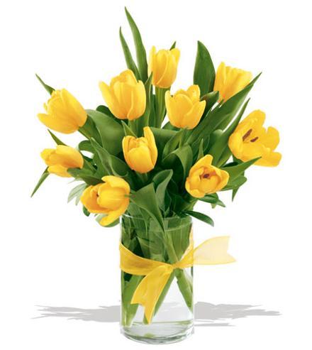 Bunga Tulip Kuning